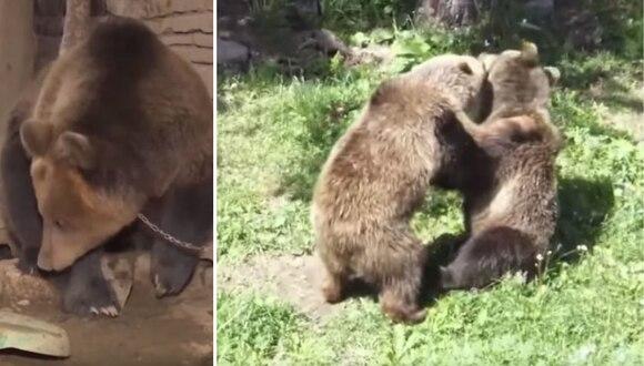 Era el oso más triste y solitario del planeta... hasta que encontró el amor. (Foto: Inside Edition en YouTube)