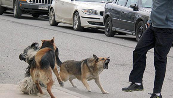 Cinco perros atacaron a un hombre en una desolada calle en Durango, México.| Foto: El Universal