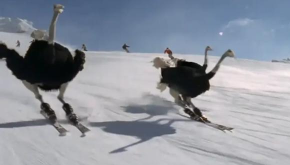 Un video viral protagonizado por talentosos avestruces esquiadores causa sensación en las redes sociales. | Crédito: @nexusstories / Instagram