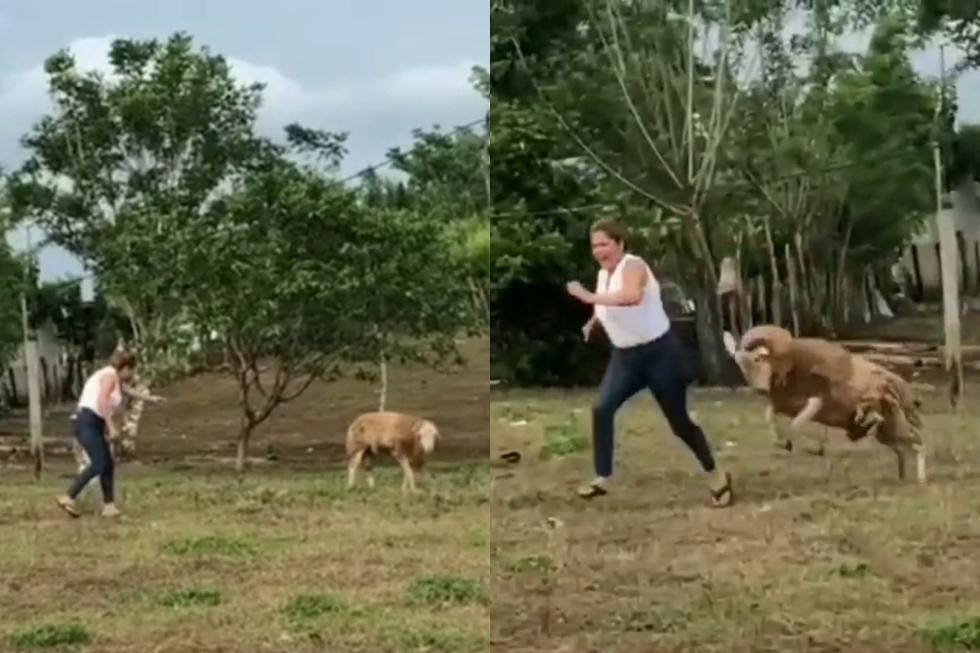 Una mujer aprendió a la mala a jamás molestar a un carnero dentro de su corral. (Fotos: @momentosvirales en TikTok)